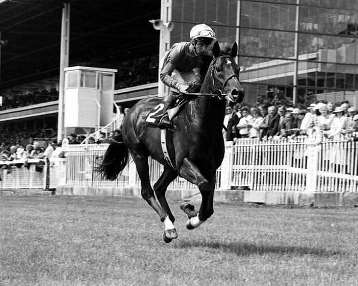 Pin by jackie cunningham on El gran senor | Jockey, Passed ...
