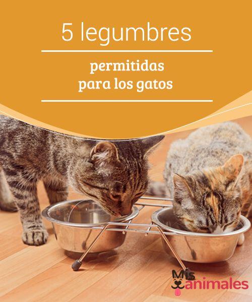 Preparar Comida Para Gatos En Casa