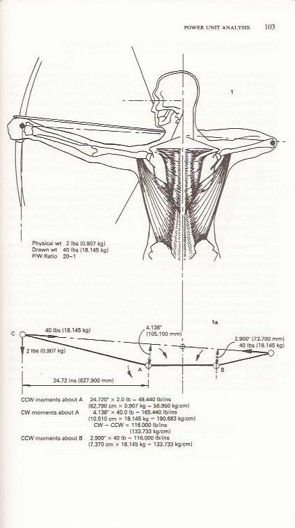 Scanned From Archery Anatomy Showing Posture Of Shoulder Being