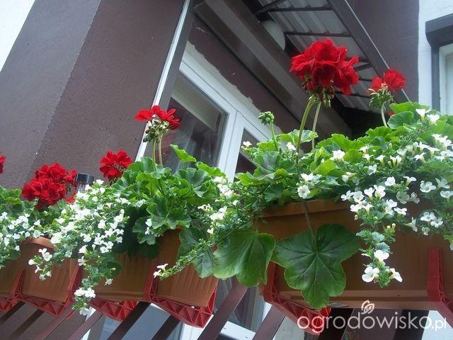 Letnie Skrzynki Balkonowe I Donice Strona 4 Forum Ogrodnicze Ogrodowisko Container Flowers Floral Decor Flowers