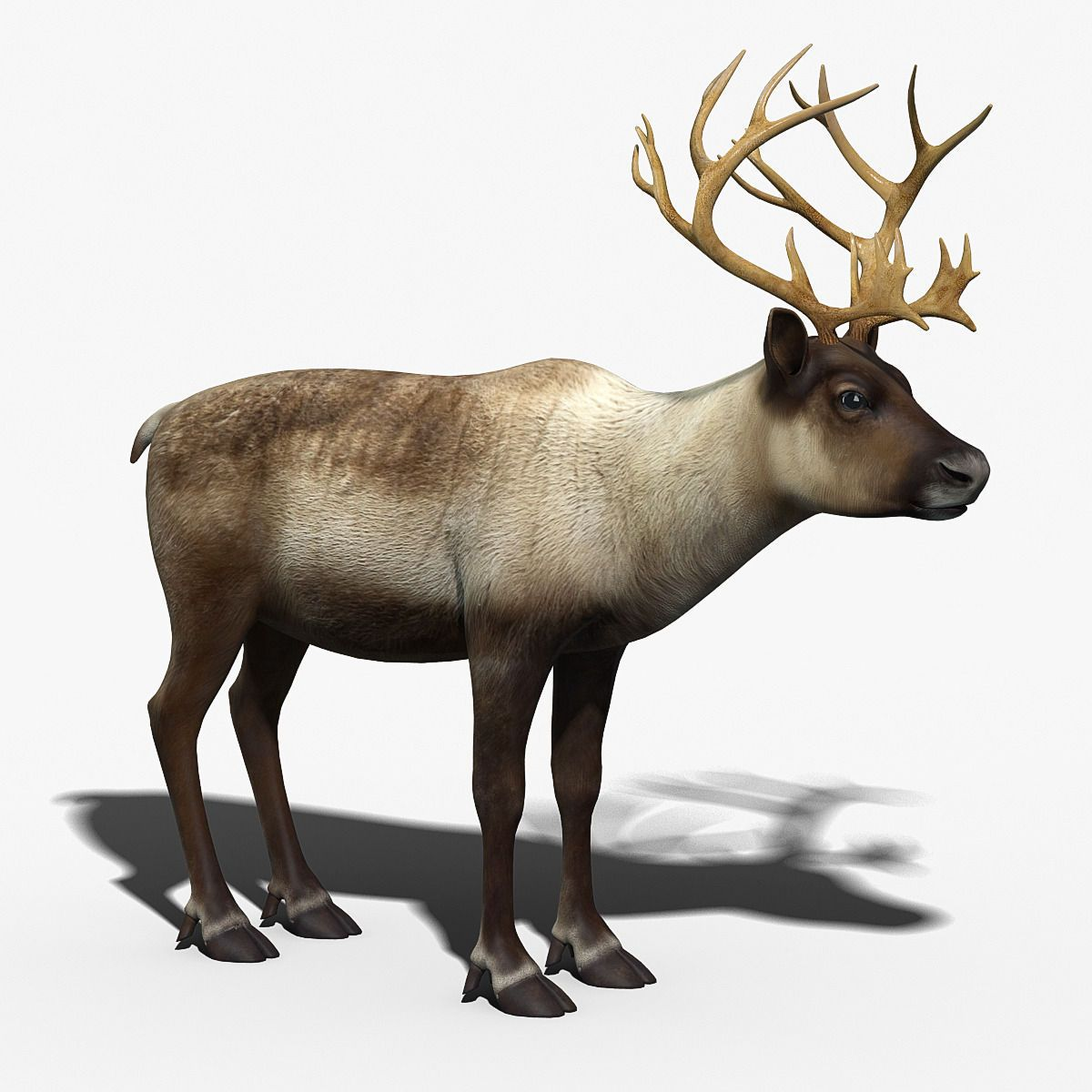 Reindeer by cgmobile. / You can buy this 3D model for 99
