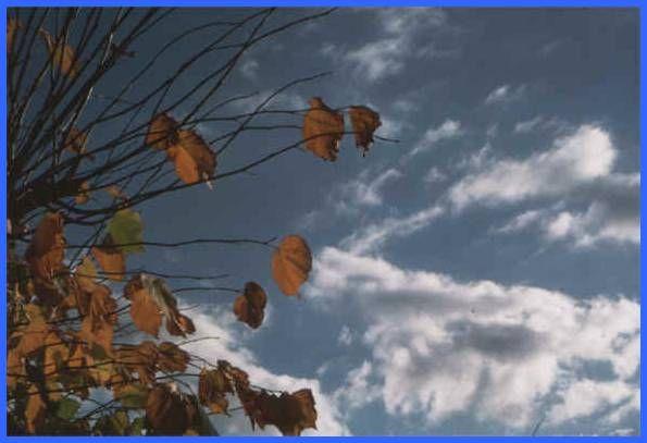 autumn - Hledat Googlem
