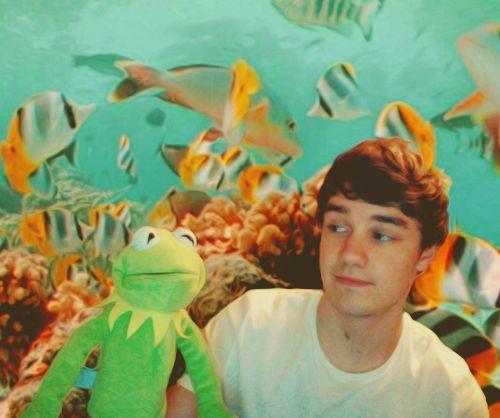 Omgosh You Adorable Little Cutie Dinosaur Stuffed Animal Liam Payne I Love One Direction