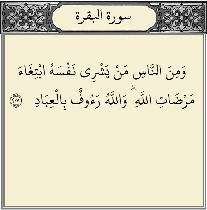 ٢٠٧ البقرة ٢ سورة البقرة Quran Holy Quran Islam