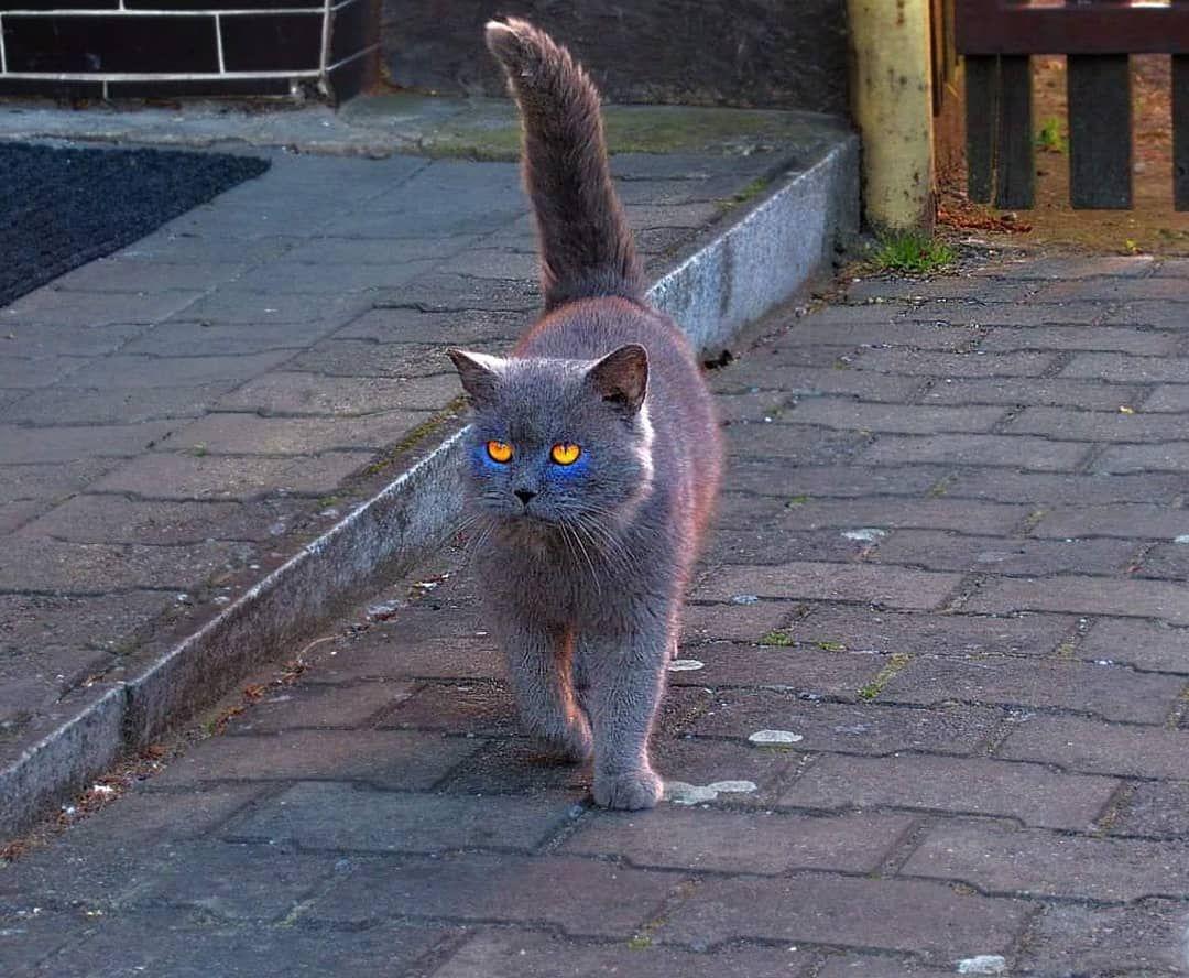#catsofinstagram #cat_features #cat #cats #animalcat #catoftheday #sweet #animals #animalworld #photooftheday #photo...