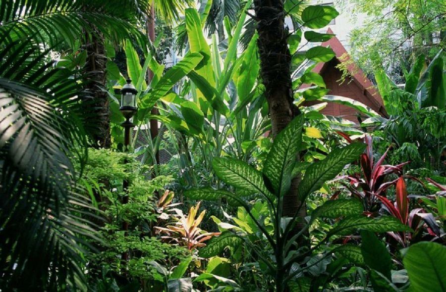La recopilacin de jardines tropicales ms espectacular ...