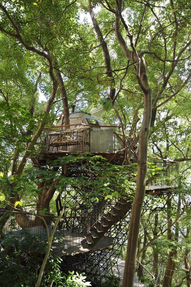 japan s largest treehouse is a sprawling structure built around a rh pinterest com