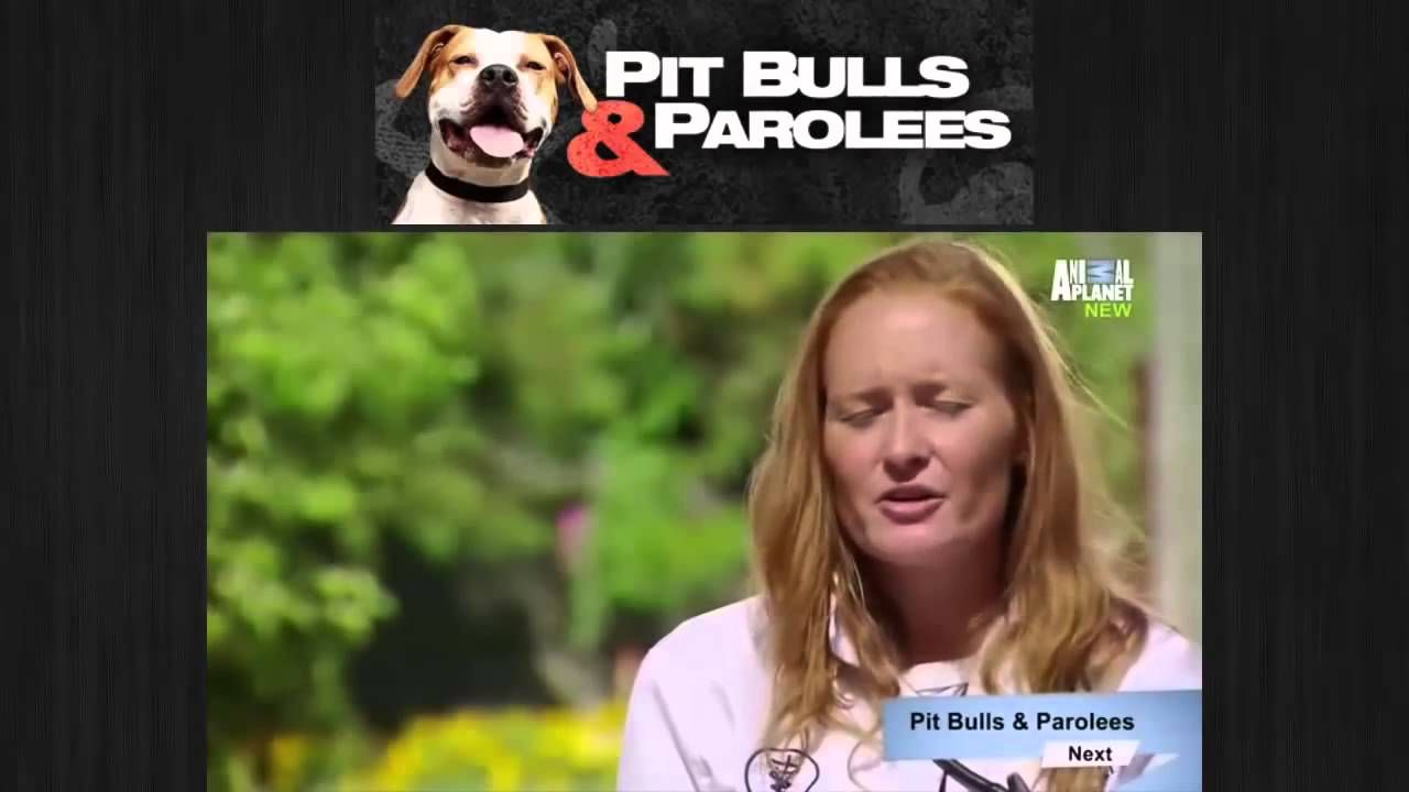 Pit Bulls And Parolees Season 6 Episode 10 Holiday Special Pitbulls Pit Bulls Parolees Youtube