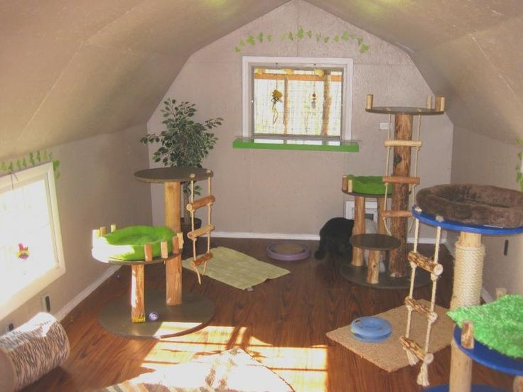cat room ideas cat room they would totally love this cat rh pinterest fr