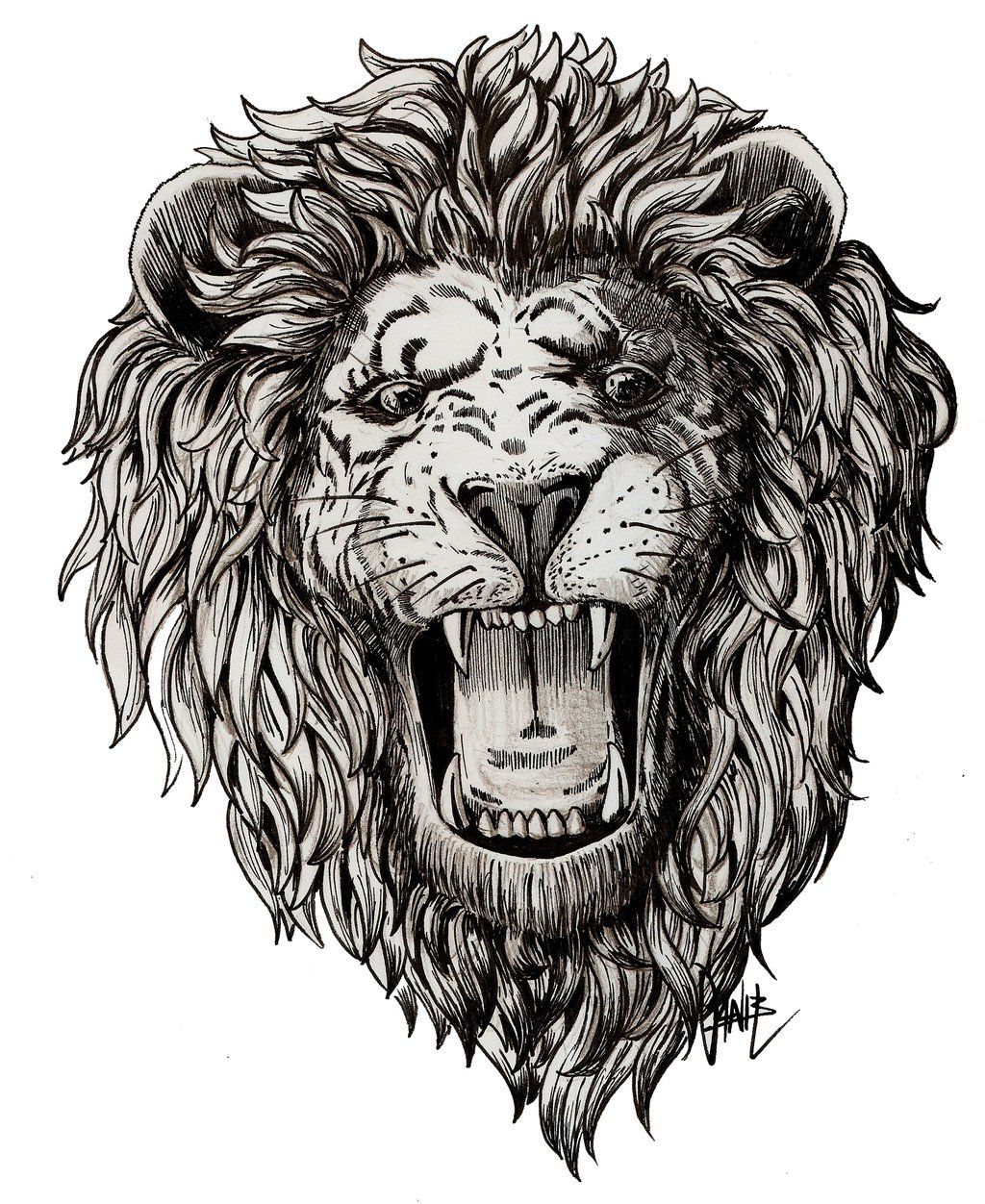 Lion Roaring Profile Drawing