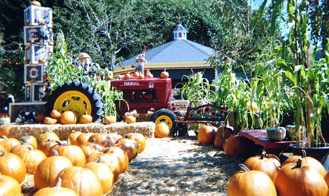 Lemos Farm In Half Moon Bay Fun For Kids Of All Ages Pumpkin Pumpkin Farm Pumpkin Patch