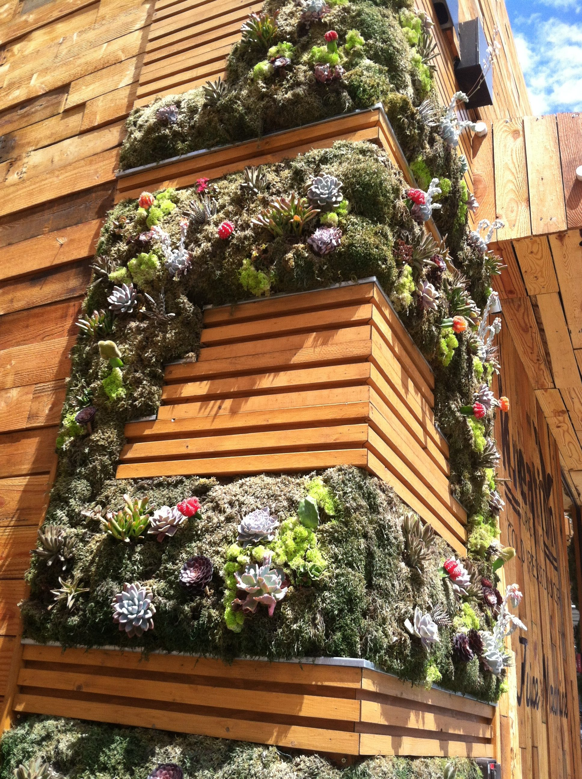 Succulent vertical garden paisajismo pinterest for Paisajismo vertical