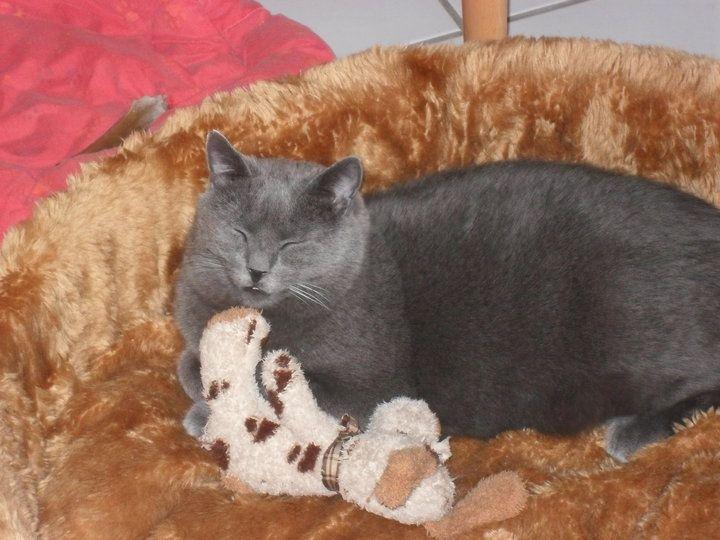 Flori Katze | Pawshake Frechen