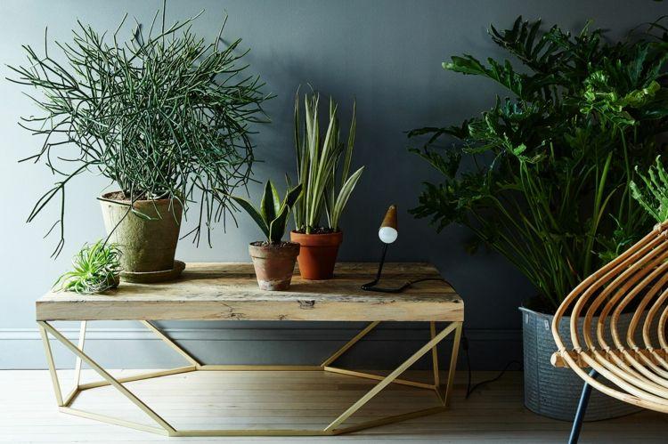 exotische wohnzimmer zimmerpflanzen ideen-tipps-pflege-deko
