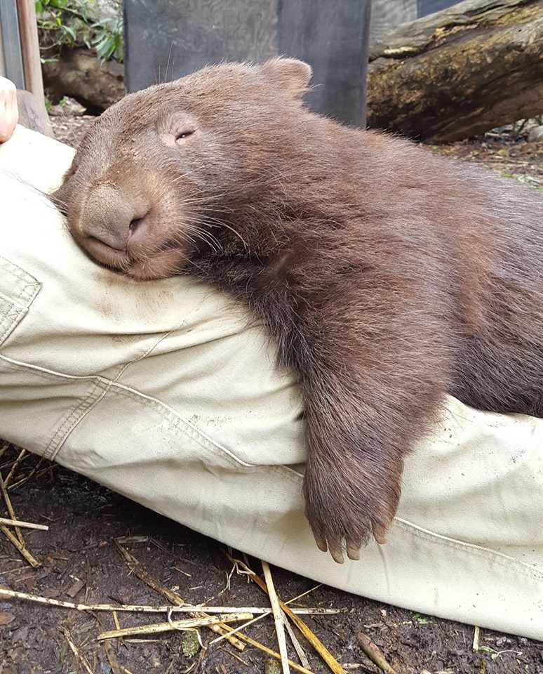 """""""I've Spent All Day Sleeping... Now I'm Tired"""" Keeper"""