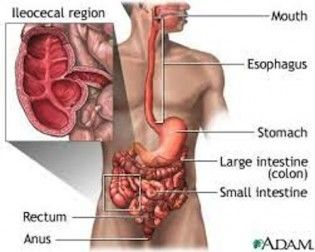 Facts About Crohn's Disease | health | Ulcerative colitis