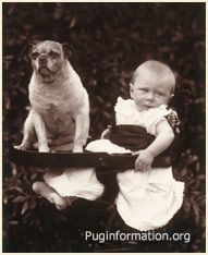 Pug Basco Also Known As Bosco 1887 With Prince Alexander Of