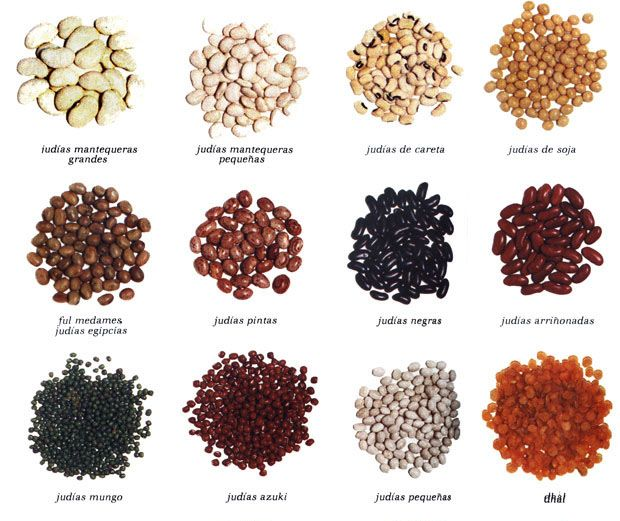 Food That Magically Regrows Itself From Kitchen Scraps: Tipos De Frijoles Y Sus Nombres
