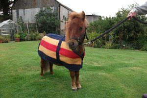 Bespoke Witney Horse Blankets for all shapes and sizes