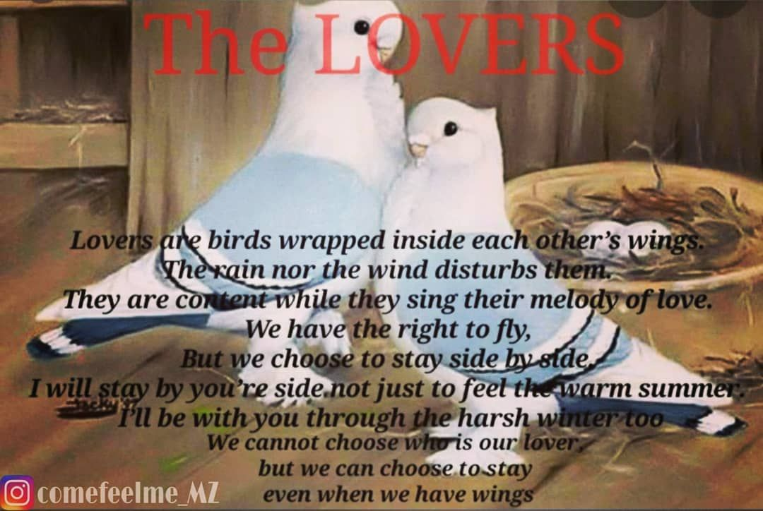 The lovers 💑 : . Lovers are birds wrapped inside each other's wings. The rain nor the wind disturbs them. They are content while they sing their melody of love. We have the right to fly, But we choose to stay side by side. I will stay by you're side not just to feel the warm summer. I'll be with you through the harsh winter too. We cannot choose who is our lover, but we can choose to stay even when we have wings . . . . . . . . . #positivity #positivevibes #love #motivation #happiness #selflove