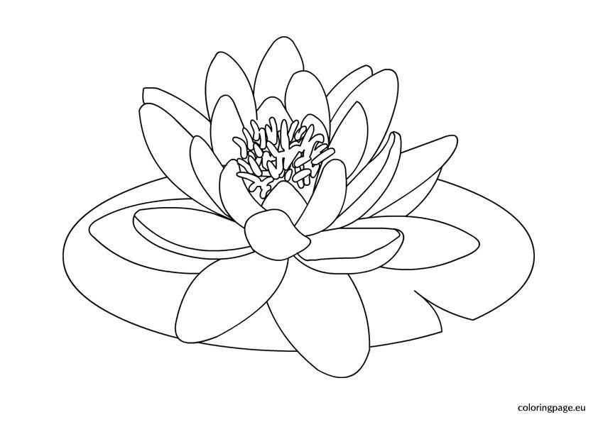 N nuphar en n b fleurs pinterest n nuphar et fleurs - Fleurs a dessiner modele ...
