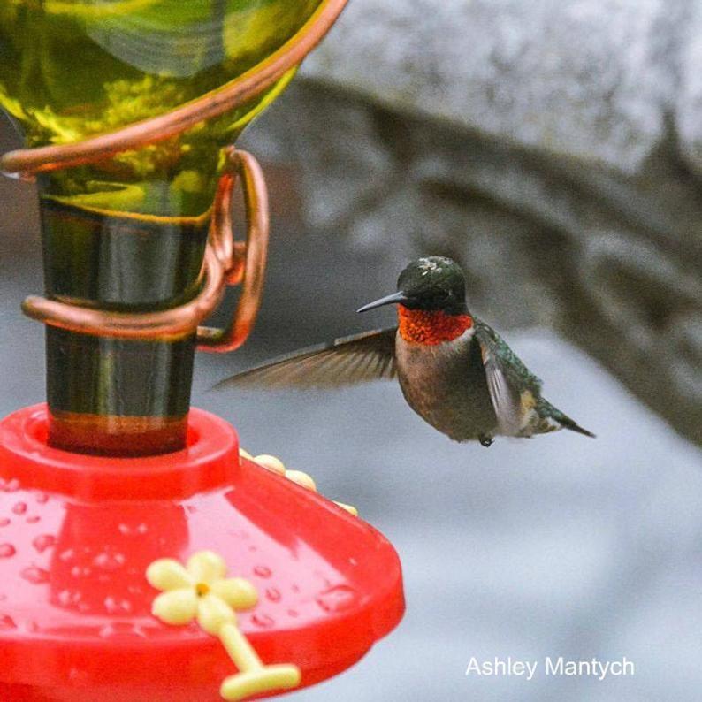 Blue or Green Wine Bottle Hummingbird Feeder The Viño Bird
