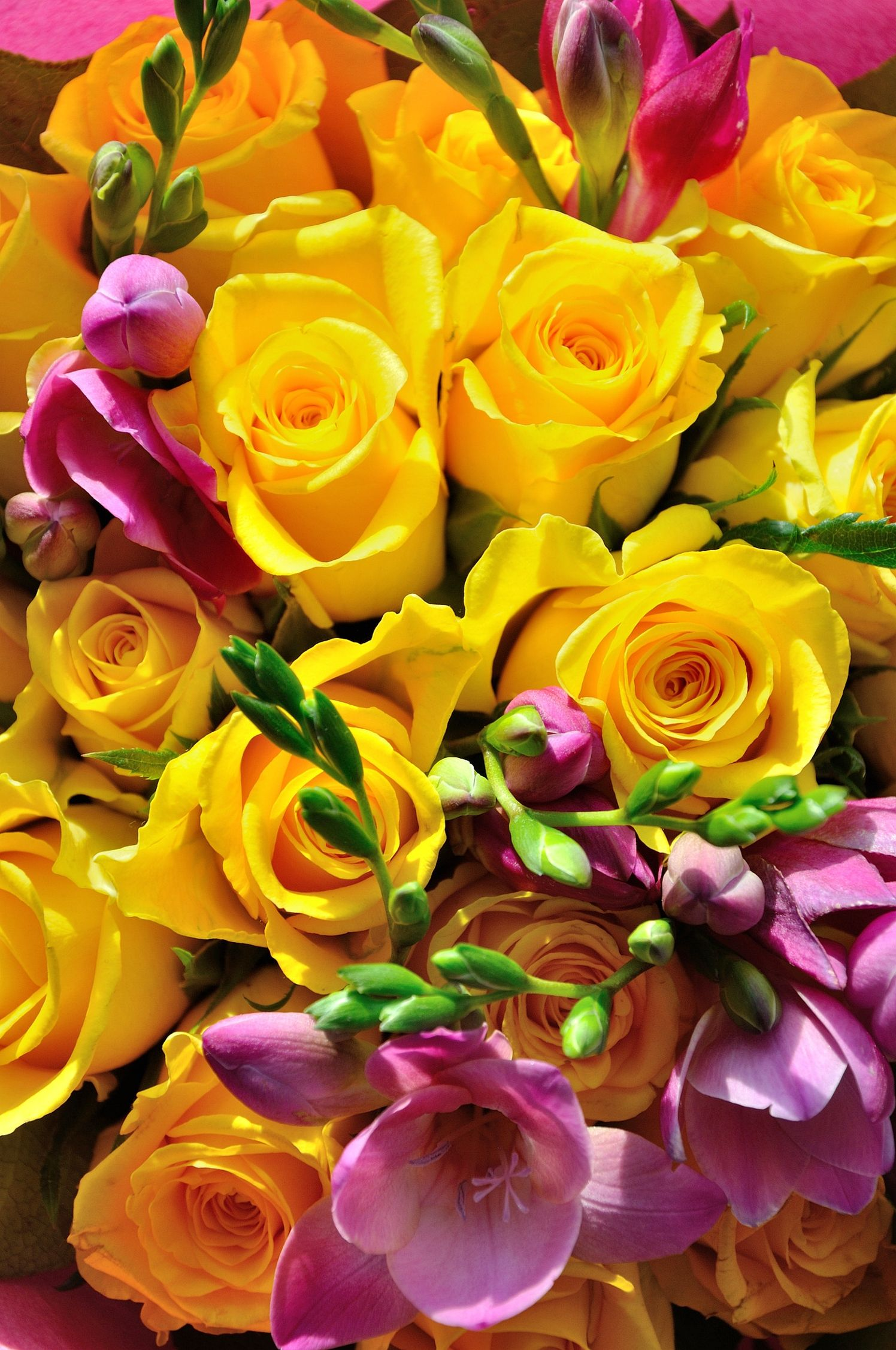 The most beautiful bouquets of yellow roses yellow roses out the front window izmirmasajfo