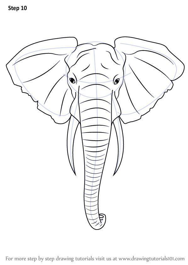 Schritt Fur Schritt Wie Man Einen Elefantenkopf Zeichnet Tiere