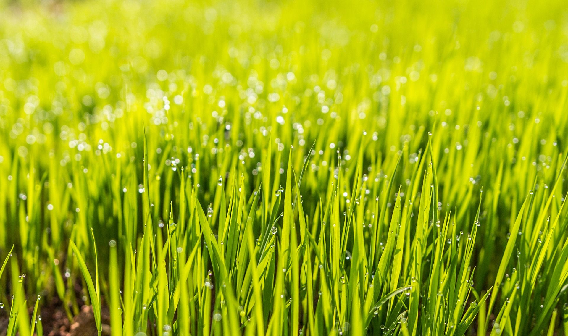 Caring for your lawn as temperatures drop grass seed