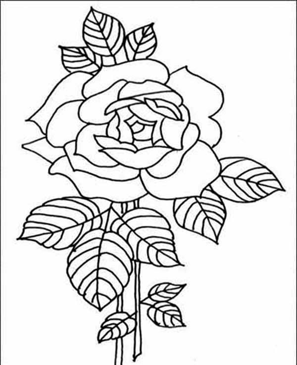Amazing Red Rose Flower Coloring Page : Kids Play Color ...