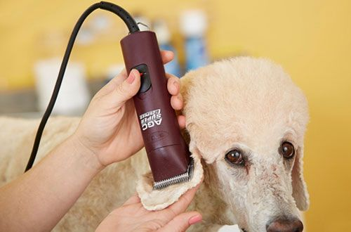 Top 10 Best Professional Dog Clippers for Sale Reviews In