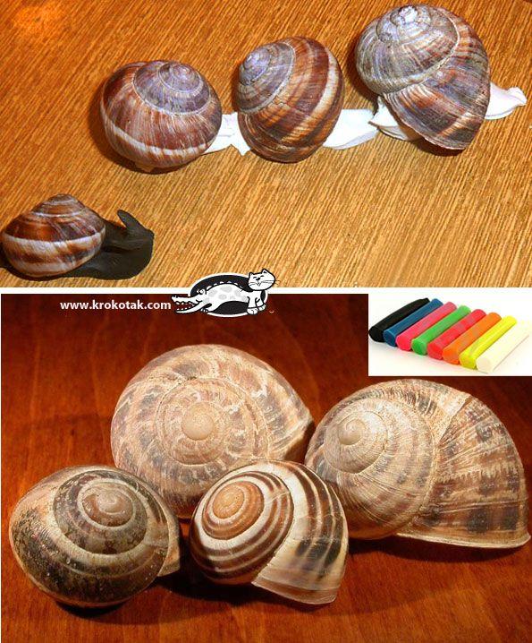 Snail Shell Craft