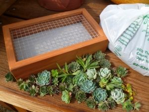 Living Pictures | Succulent Gardens: The Growing Grounds Article On  Planting Living Picture Frames And