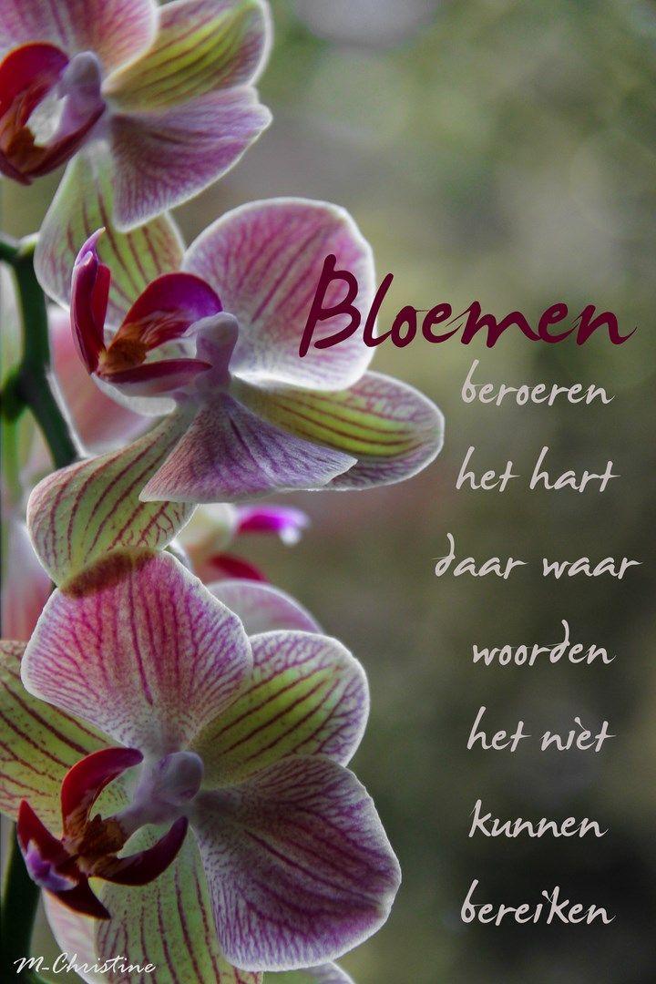 Citaten Over Bloemen : Bloemen beroeren het hart woorden die je raken