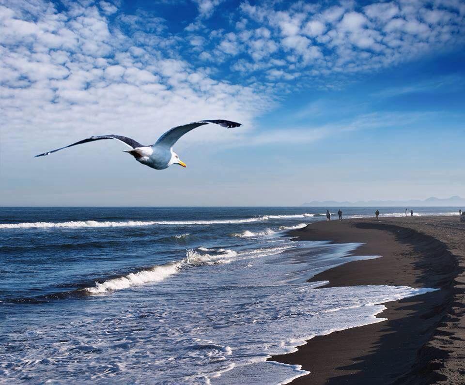 Resultado de imagen para playa chachalacas veracruz