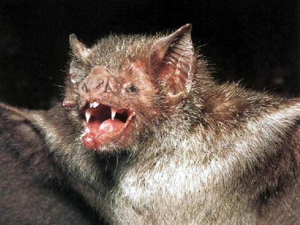 Scariest Vampire Animals