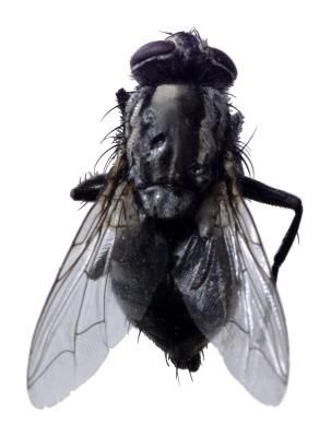 How to Get Rid of Flies & Horseflies | household hints | Get