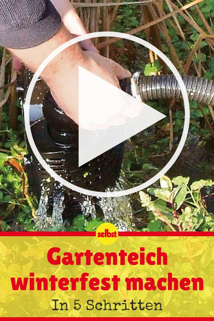 Teich Winterfest Machen Blumen Und Pflanzen Teich Brunnen