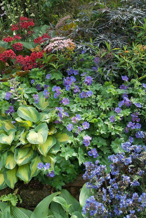 Low Maintenance Shade Plants