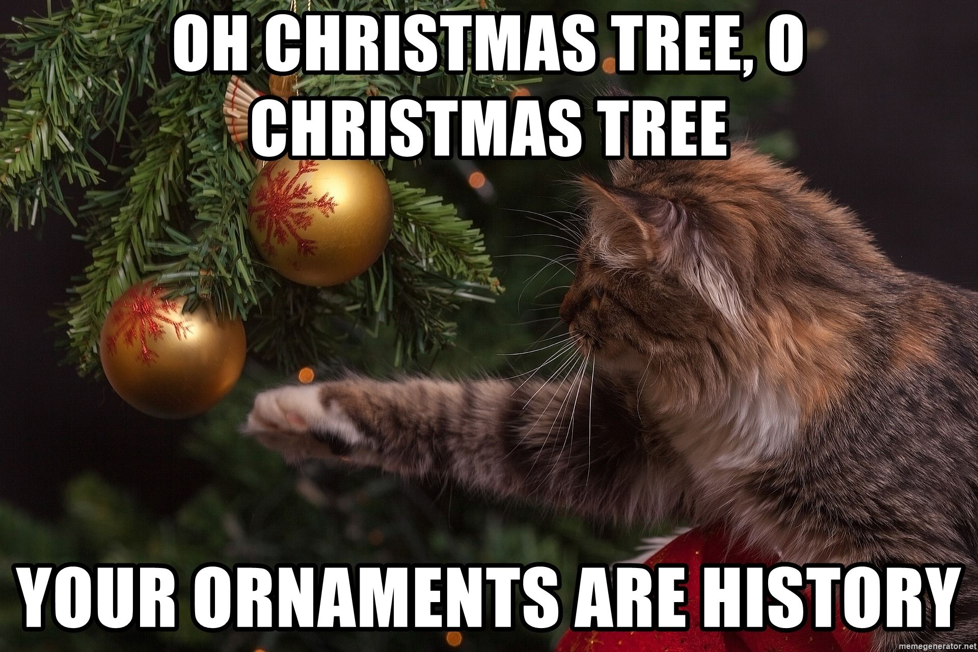 Cat Playing With Christmas Tree Ornaments Via Meme Generator Christmas Tree Tree Christmas Tree Ornaments