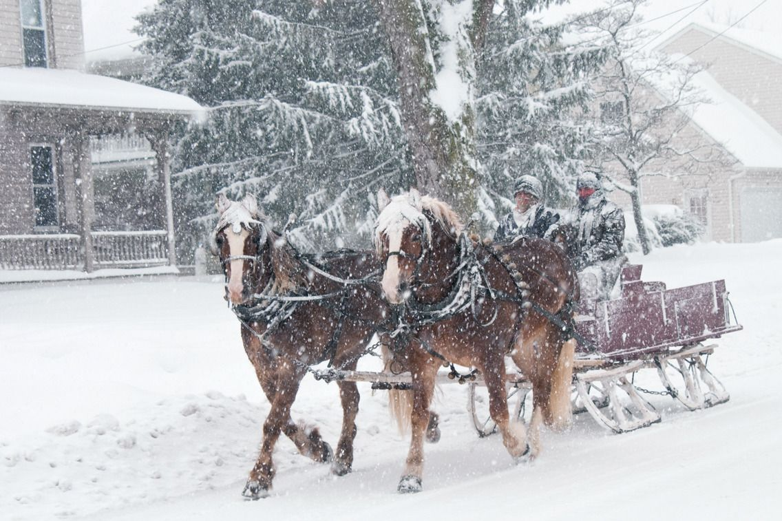 Horse drawn sleigh in terre hill horses horse wagon