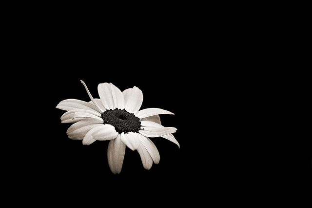 Black And White Flowers Tumblr Background | Places to ...