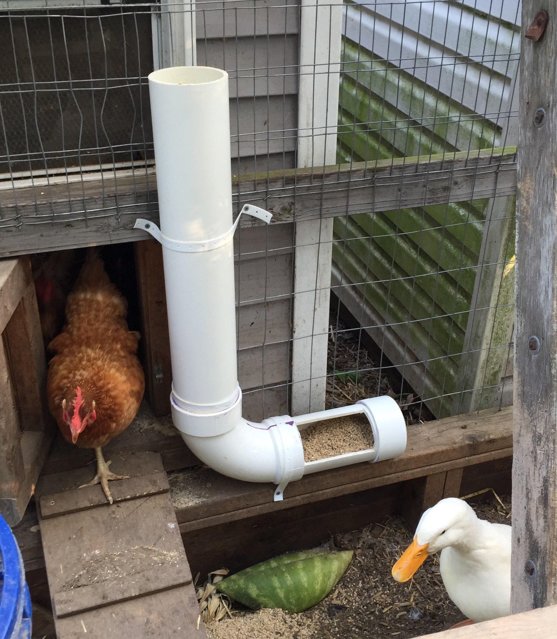 DIY PVC chicken and duck feeder