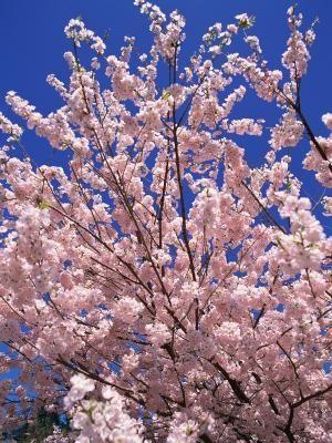 Homemade Dormant Oil Spray For Fruit Trees Hunker Fruit Trees Pink Trees Large Flower Pots