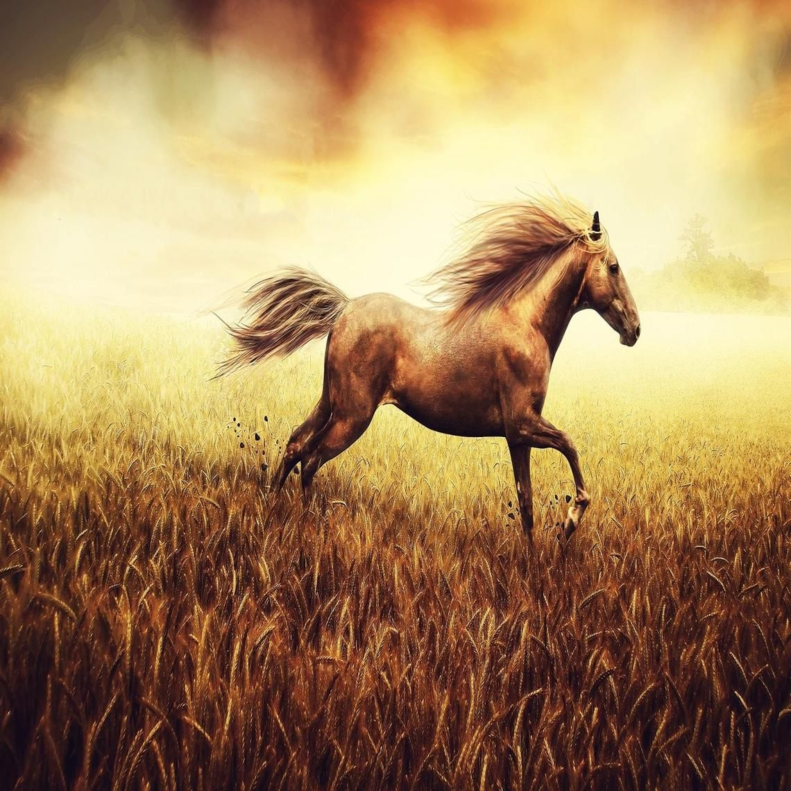 Download Wallpaper Horse Summer - f712955f9c89289c495bc68cfc608845  You Should Have_151130.jpg