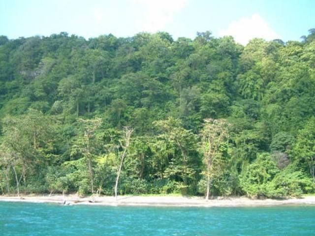 Pin Di Alam Indonesia