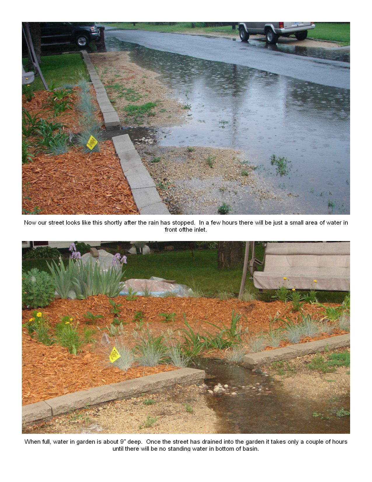 Why we planted a rain garden-pic5