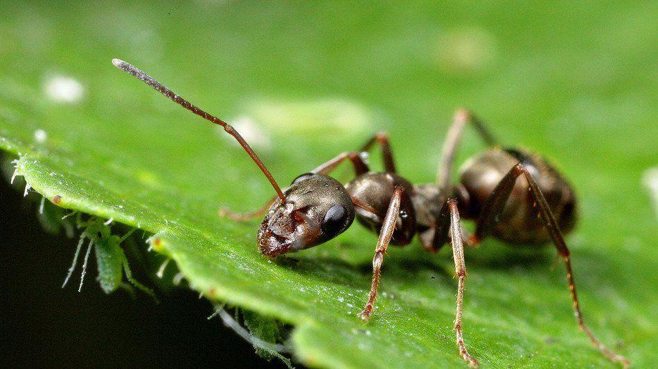 地球还有救 蚂蚁一直在做低碳环保的事新的研究有了令人兴奋的消息