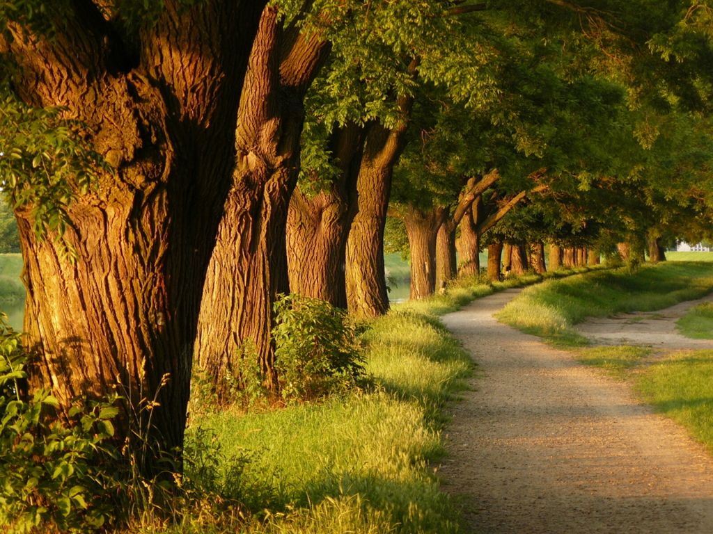 Path By The Streem Nature Tree Nature Beautiful Tree