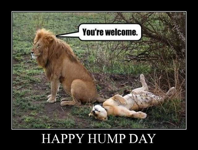 Happy Hump Day! #dirtyjoke | Friday funny pictures, Funny animals ...